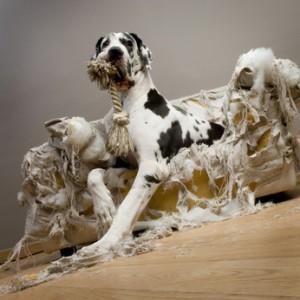 comportement du chien anxiété